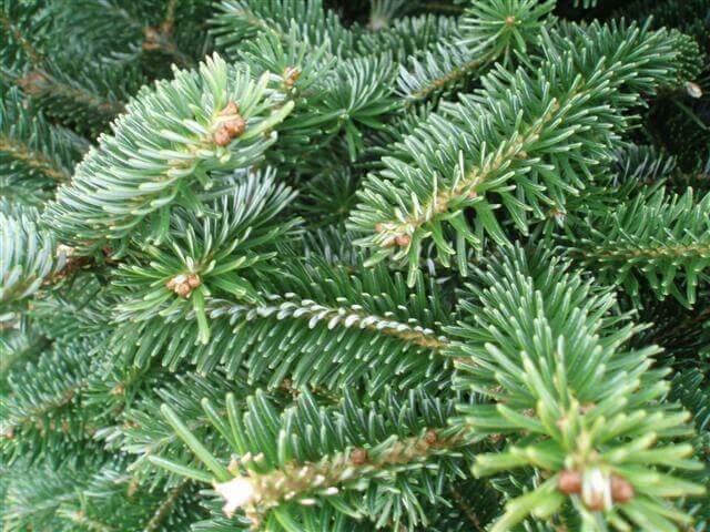 Bawtry Christmas Trees – Merchant Case Study